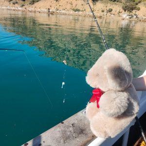 Fishing Tambo Teddy