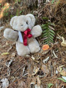 Bushwalking Teddy Bear